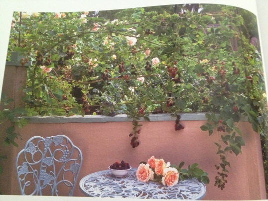 Climbing rose and blackberry vines cascading a wall.